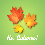 Olá! molde do inseto do outono de setembro com rotulação Folhas brilhantes da queda Cartaz, cartão, etiqueta, projeto da bandeira Fotos de Stock Royalty Free