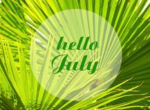 Olá! o cartão de acolhimento de julho com texto na palmeira tropical verde natural sae do fundo Fotografia de Stock
