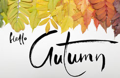 Olá! outono Inspiração do preto de Hahddrawn no fundo colorido das folhas Imagens de Stock