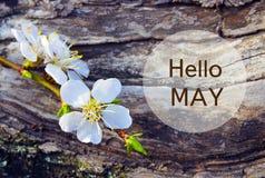 Olá! possa Ramo da flor de cerejeira no fundo da casca de árvore Conceito da primavera fotografia de stock royalty free
