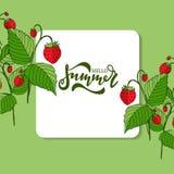 Olá! projeto da bandeira do vetor do verão Imagem de Stock