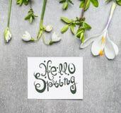 Olá! rotulação da mola com a vária planta da primavera: Lírio do vale, das flores do açafrão e dos galhos da mola Imagens de Stock