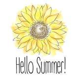 Olá! verão! Ilustração amarela do vetor do girassol no fundo branco ilustração stock