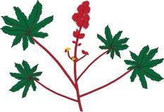 Oléagineux de chasse (Ricinus communis) Image libre de droits