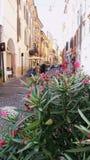 Oléandre fleurissant de buisson contre le contexte d'une rue étroite en Italie photo stock