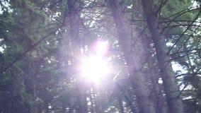 Olśniewać Lasowego słońce zbiory wideo