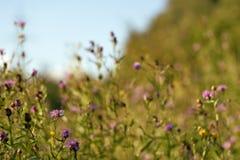 Olśniewająca lato łąka Fotografia Royalty Free