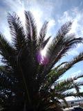 Olśniewająca palma zdjęcia royalty free
