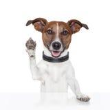 Olá! adeus cão cinco elevado Foto de Stock Royalty Free