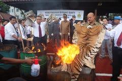 Olaglig djurlivhandel i Indonesien Fotografering för Bildbyråer