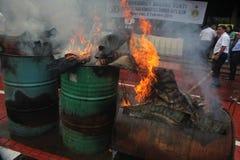 Olaglig djurlivhandel i Indonesien Arkivfoto