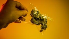 olaglig marijuanaförsäljning i Europa och Ryssland nPlans för legalisering för 2018 royaltyfri bild