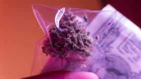 olaglig marijuanaförsäljning i Europa och Ryssland nPlans för legalisering för 2018 arkivbild