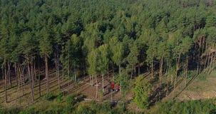 Olaglig skog som svettas och att tjuvjaga, skada till miljön, miljö- söndring arkivfilmer