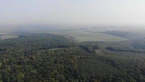 Olagligt avverka av skogar, skogsavverkningområden Sikt från luften, klipsk framåt teknik arkivfilmer