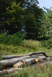 Olagligt avverka av träd i de Carpathian skogarna fotografering för bildbyråer