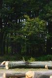 Olagligt klipp av träd i skogen av Carpathiansna royaltyfri foto