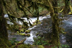 Olallie Creek Royalty Free Stock Image