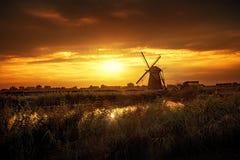 Olandese gigante calda Fotografia Stock