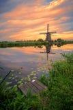 Olandese gigante calda Immagine Stock