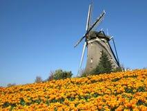 Olandese Tulip Windmill Landscape Fotografie Stock Libere da Diritti