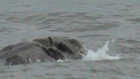 Olas oceánicas sobre una prominencia rocosa - costa galés metrajes
