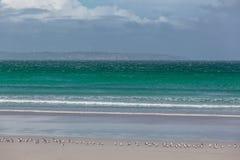 Olas oceánicas verdes que fluyen sobre la playa con los pájaros Turbinas de viento que se descoloran en el fondo Fotos de archivo