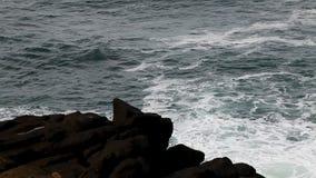 Olas oceánicas y movimiento rápido de Lava Rock Shore Depoe Bay Oregon metrajes