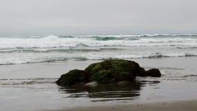 Olas oceánicas y roca en la playa cubierta en planta verde almacen de video