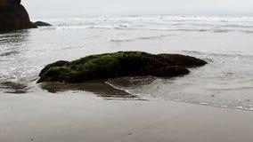 Olas oceánicas y roca en la playa cubierta en planta verde almacen de metraje de vídeo