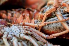 Olbrzymi homar na grillu Fotografia Stock