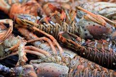 Olbrzymi homar na grillu 3 Zdjęcia Stock