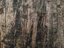 Old wood. Old wood texture royalty free stock photo