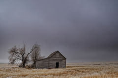 Old Abandoned Barn in an Empty Field. Old abandoned barn and old tree in an open field in Colorado Royalty Free Stock Photography