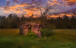 Old abandoned broken barn at the edge of the forest with tall green grass and wild flowers at sunset. Styled stock photo in royalty free stock photo