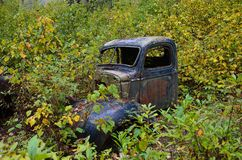 Old abandoned car being reclaimed by bush stock photo