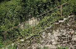 Old abandoned cement staircase with rusty railing invaded by vegetation . Grunge background for copy space.  royalty free stock image