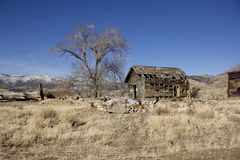 Old abandoned delapitating shack. In the desert Royalty Free Stock Photography
