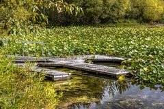 Old abandoned dock among lilypads. Royalty Free Stock Photos