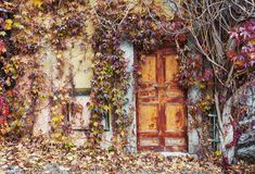 Old abandoned doors overgrown with vines in autumn Stock Photography