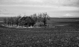 Old abandoned farm house surrounded by trees with a mountain in the background. Old abandoned farm house in a plowed field surrounded by trees with a mountain in Royalty Free Stock Images