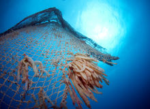 Old abandoned fishing net. With squid eggs Stock Photography