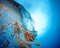Old abandoned fishing net. With squid eggs Stock Images