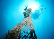 Old abandoned fishing net. With squid eggs Stock Photos