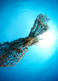 Old abandoned fishing net. With squid eggs Royalty Free Stock Image