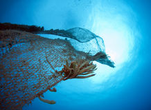 Old abandoned fishing net. With squid eggs Royalty Free Stock Images