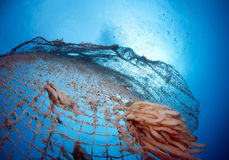 Old abandoned fishing net. With squid eggs Stock Photo