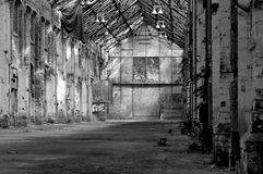 Old abandoned hall with cat Royalty Free Stock Image