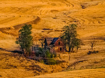 Old Abandoned Homestead in Late Afternoon Light Royalty Free Stock Photo