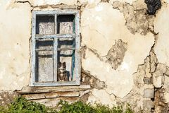 Old abandoned house and a cat sitting in the window. Autumn mood royalty free stock photo